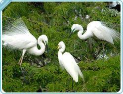 Bharatpur Bird Sanctuary Bharatpur