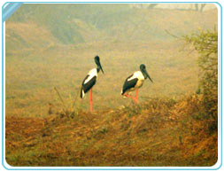 Traveling Tips for Bharatpur